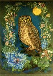 Folded card: The Little Owl
