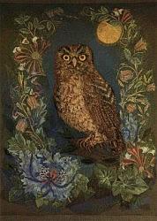 Postcard: The Little Owl – Athene Noctua