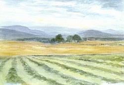 Postcard: Haymaking