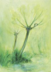 Postcard: Spring Tree