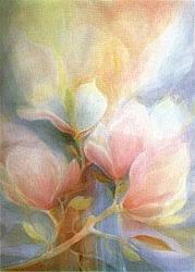 Postcard: Magnolia