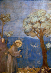 Postcard: St. Francis Preaching to the Birds
