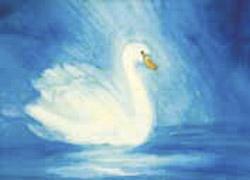 Postcard: Swan