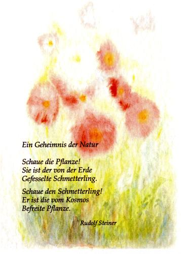 Postcard: Schaue die Pflanze!