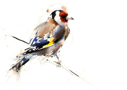 Goldfinch on a line