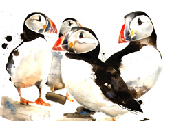 Puffins in a group
