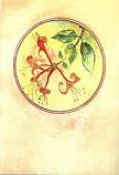 Folded card: Honeysuckle