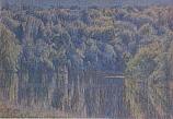 Postcard: Woodland Lake