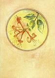 Postcard: Honeysuckle