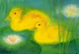 Postcard: Two ducks in a pond