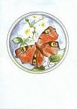 Postcard: Butterfly
