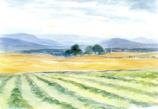 Haymaking: Large folded card