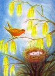 Postcard: Bird nest