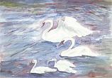 Postcard: Swans