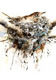 Nesting Thrush