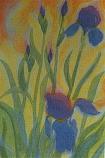 Postcard:  Metamorphosis of an Iris