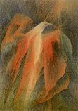 Postcard: Bird of the night