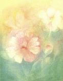 Postcard: Polyantha