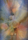 Roses in Mist: Extra large folded card