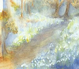 Postcard: Snowdrops
